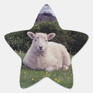 Lamb Resting On Remote Coastline In South Devon Star Sticker