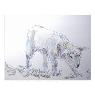 Lamb sketch drawing postcard