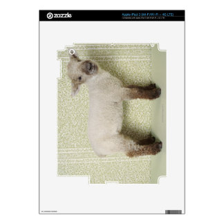 Lamb Standing Indoors, and Floral Wallpaper Skins For iPad 3