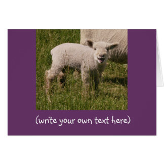 Lamb Talk Card