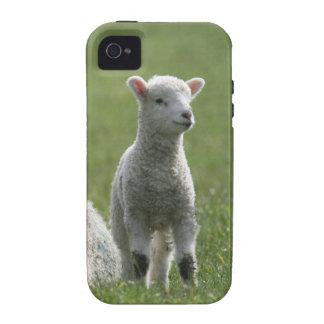 Lamb Vibe iPhone 4 Case
