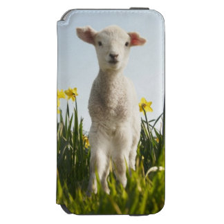 Lamb walking in field of flowers iPhone 6/6s wallet case