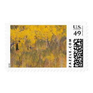 Lambert Hollow, aspen trees 2 Stamp