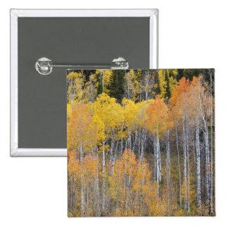 Lambert Hollow, aspen trees 3 Pinback Button