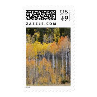 Lambert Hollow, aspen trees 3 Stamp
