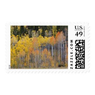Lambert Hollow, aspen trees 4 Postage Stamps