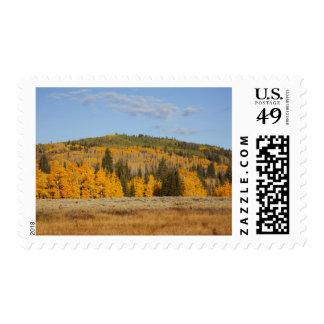 Lambert Hollow, aspen trees Stamp