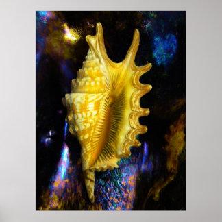Lambis digitata Seashell Poster