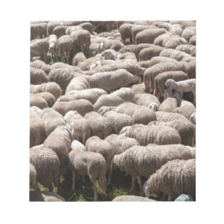 lambs and sheep in the flock in the mountains note pad