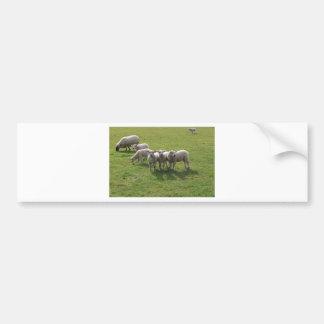 Lambs Bumper Sticker