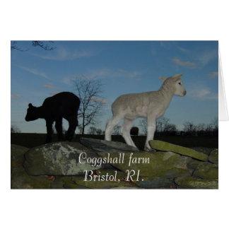 Lambs Card