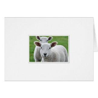 lambs in meadow card