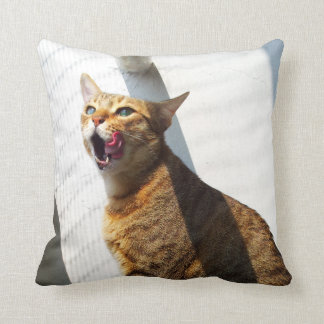 Lamedura de la almohada marrón del gato del tabby