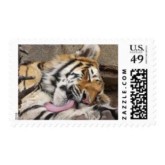 Lamedura del altaica del Tigris del Panthera del Estampilla