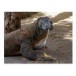 Lamedura del dragón de Komodo Postales