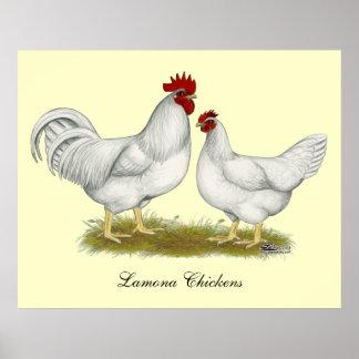 Lamona Chickens Poster