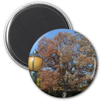 Lamp post at entrance to Arlington in Fall Magnets