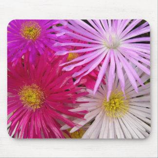 Lampranthis púrpura rosado delicado florece Mousep Tapetes De Ratón