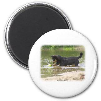 Lancashire Heeler 9R056D-333 Refrigerator Magnets