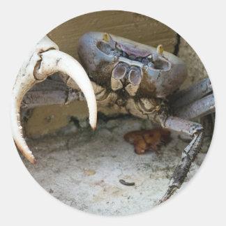 Land Crab Classic Round Sticker