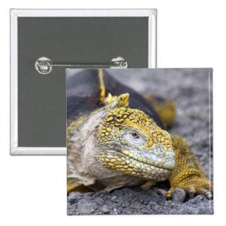 Land Iguana 2 Inch Square Button