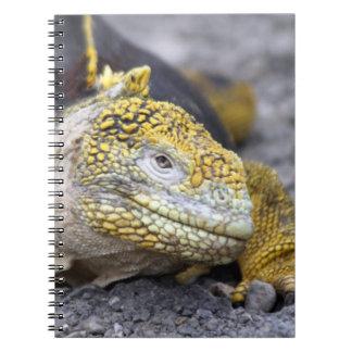 Land Iguana Spiral Notebook