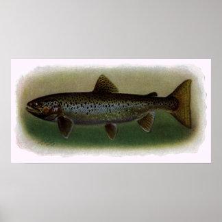 Land-Locked Salmon Painting Poster