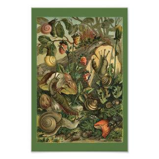 Land Molluscs Snails Vintage 1904 Print