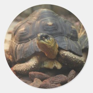 Land Turtle Classic Round Sticker