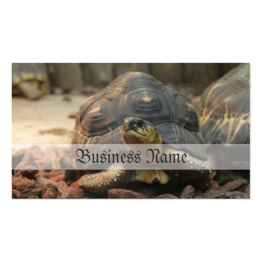 Land Turtle Double-Sided Standard Business Cards (Pack Of 100)