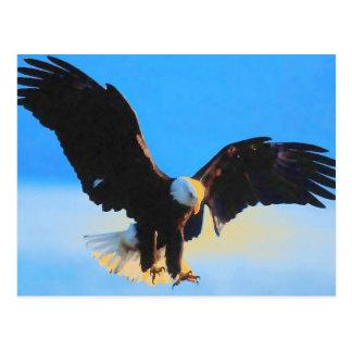 Landing Bald American Eagle Postcard