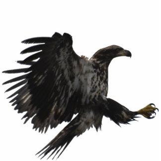 LANDING BALD EAGLE sculpted Wildlife Gift Photo Sculpture