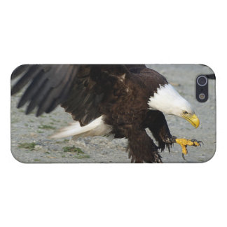 Landing Bald Eagle Wildife Photo Case For iPhone SE/5/5s