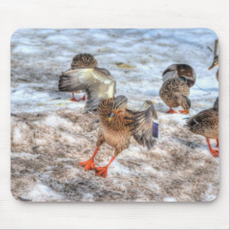 Landing Female Mallard Duck Birdlover Wildlife Mouse Pad