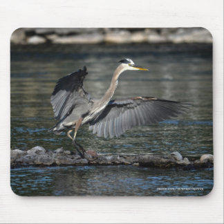 Landing Great Blue Heron Wildlife Bird Photo 3 Mouse Pad