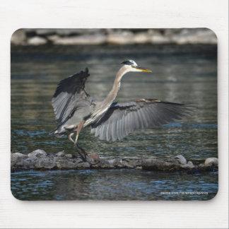 Landing Great Blue Heron Wildlife Bird Photo 3 Mousepads
