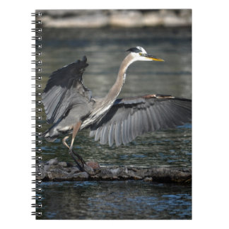 Landing Great Blue Heron Wildlife Bird Photo 3 Notebook