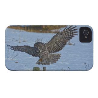 Landing Great Grey Owl and Fence Wildlife Photo iPhone 4 Case