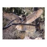 Landing Great Horned Owl Post Cards