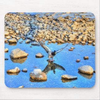 Landing Mallard Drake Birdlover Wildlife Photo Mouse Pad