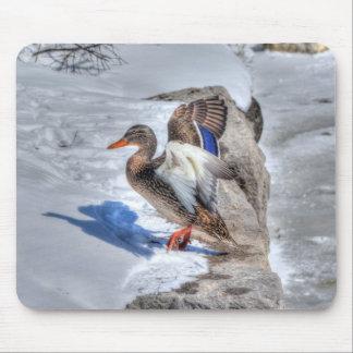 Landing Mallard Duck Birdlover Wildlife Photo Mouse Pad