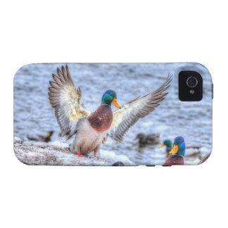 Landing Mallard Duck Drake 5 Wildlife Photo iPhone 4 Cover
