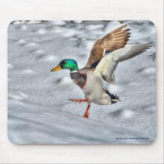 Landing Mallard Duck Drake Wildlife Photo Mouse Pad