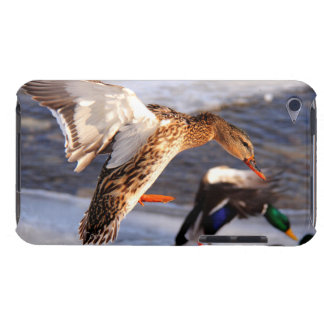 Landing Mallard Duck Wildlife Photo Barely There iPod Cover
