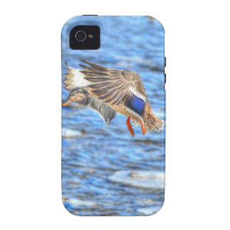 Landing Mallard Duck Wildlife Photo Case-Mate iPhone 4 Case