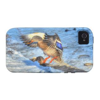 Landing Mallard Duck Wildlife Photo iPhone 4 Cases