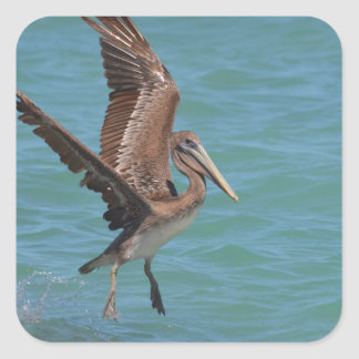 Landing Pelican Square Sticker
