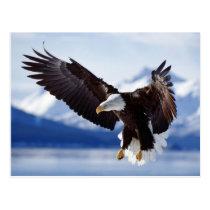 Landing soon Eagle Postcard