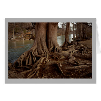 Landscape 24 moody river roots tree fishing card