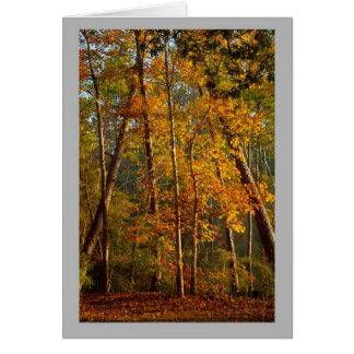 Landscape 44 Colorful autumn forest Card